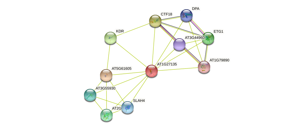 AT1G27135 protein (Arabidopsis thaliana) - STRING interaction network