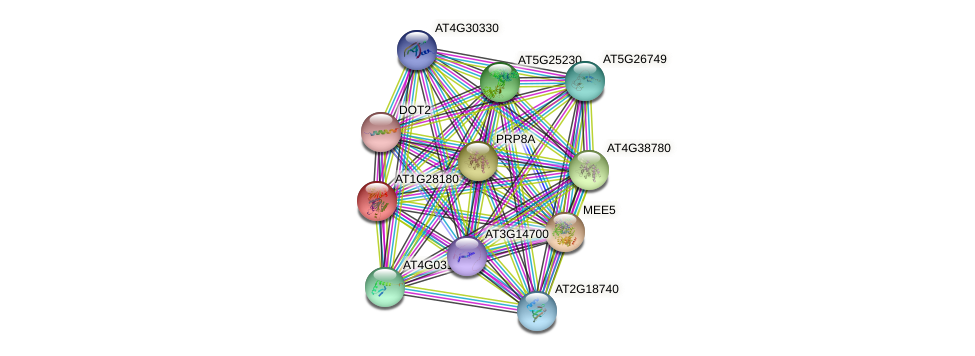 AT1G28180 protein (Arabidopsis thaliana) - STRING interaction network