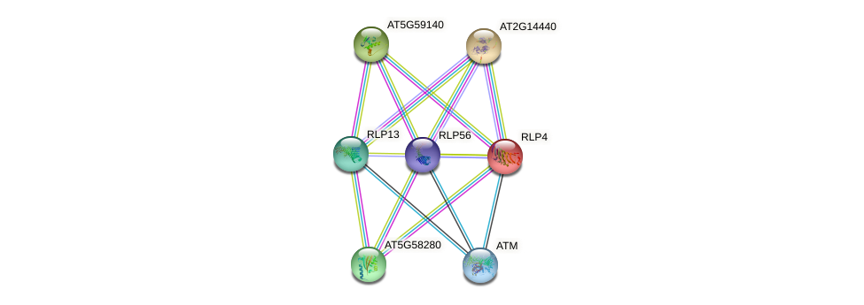 RLP4 protein (Arabidopsis thaliana) - STRING interaction network