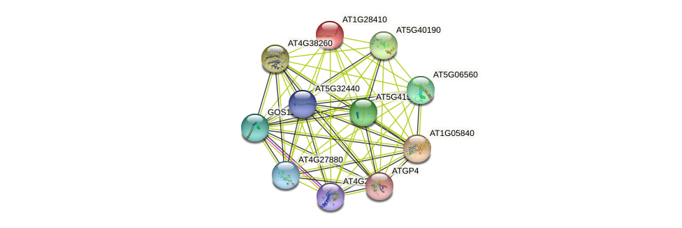 AT1G28410 protein (Arabidopsis thaliana) - STRING interaction network
