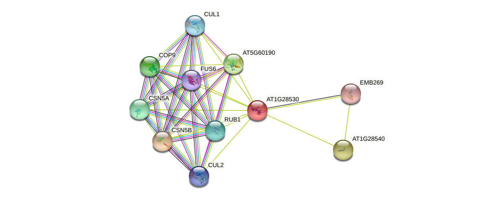 AT1G28530 protein (Arabidopsis thaliana) - STRING interaction network
