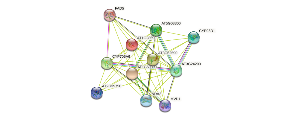 AT1G28590 protein (Arabidopsis thaliana) - STRING interaction network