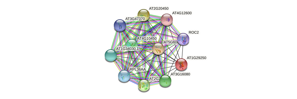 AT1G29250 protein (Arabidopsis thaliana) - STRING interaction network