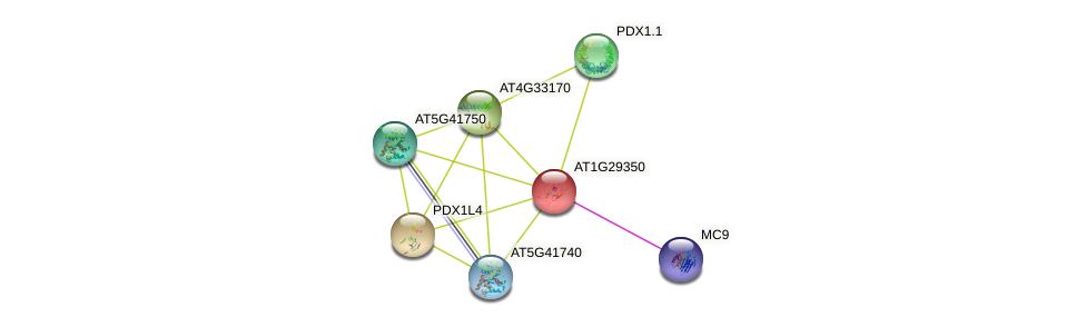 AT1G29350 protein (Arabidopsis thaliana) - STRING interaction network