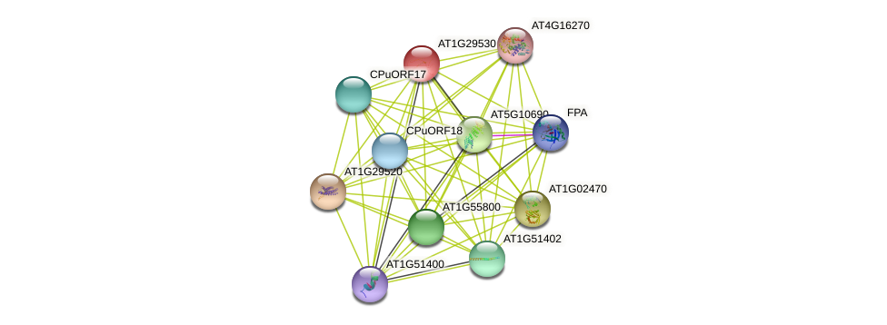 AT1G29530 protein (Arabidopsis thaliana) - STRING interaction network