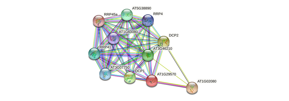 AT1G29570 protein (Arabidopsis thaliana) - STRING interaction network