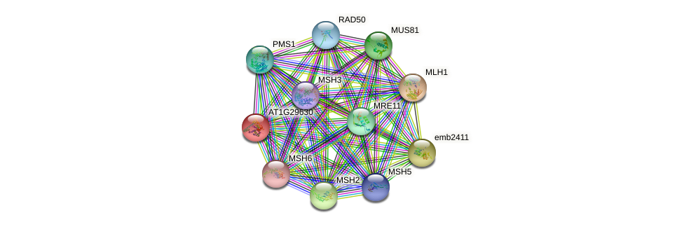 AT1G29630 protein (Arabidopsis thaliana) - STRING interaction network