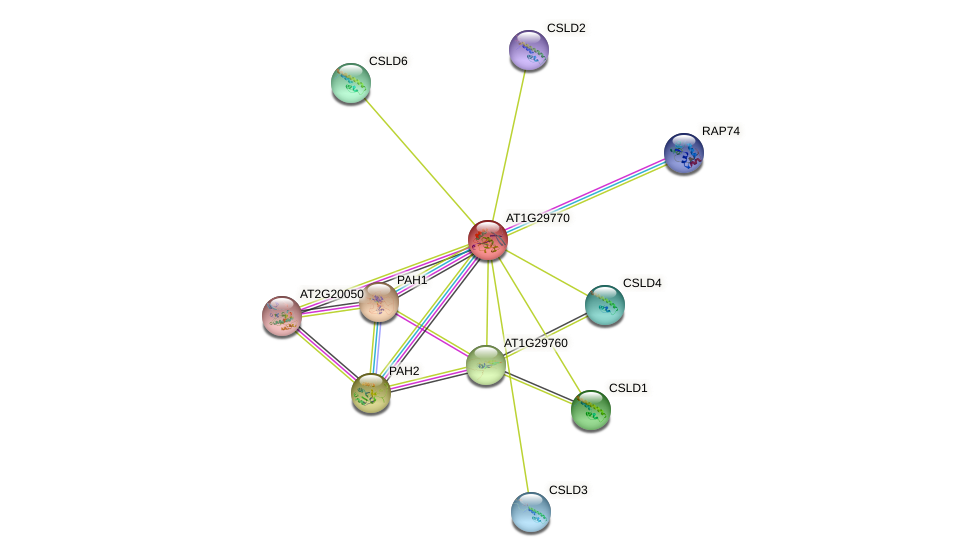 AT1G29770 protein (Arabidopsis thaliana) - STRING interaction network