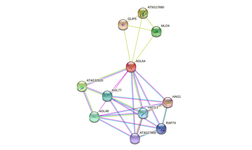 AGL64 protein (Arabidopsis thaliana) - STRING interaction network