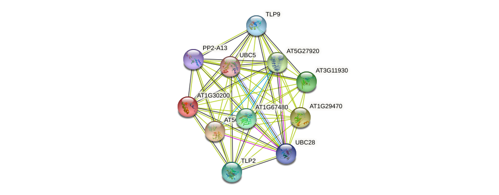 AT1G30200 protein (Arabidopsis thaliana) - STRING interaction network