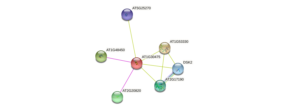 AT1G30475 protein (Arabidopsis thaliana) - STRING interaction network