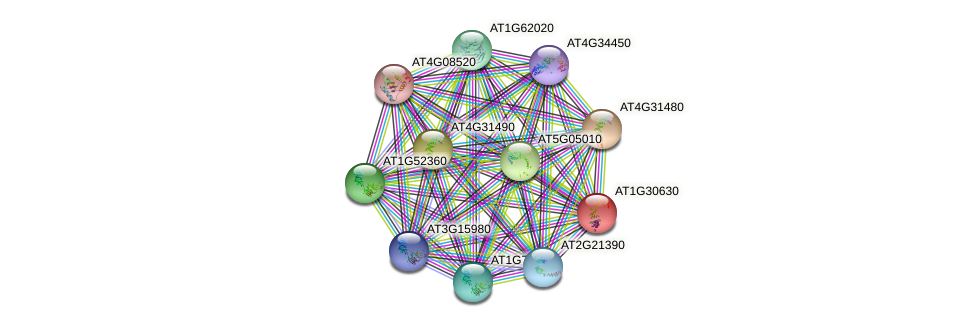 AT1G30630 protein (Arabidopsis thaliana) - STRING interaction network