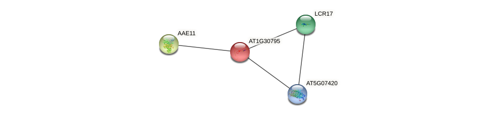 AT1G30795 protein (Arabidopsis thaliana) - STRING interaction network