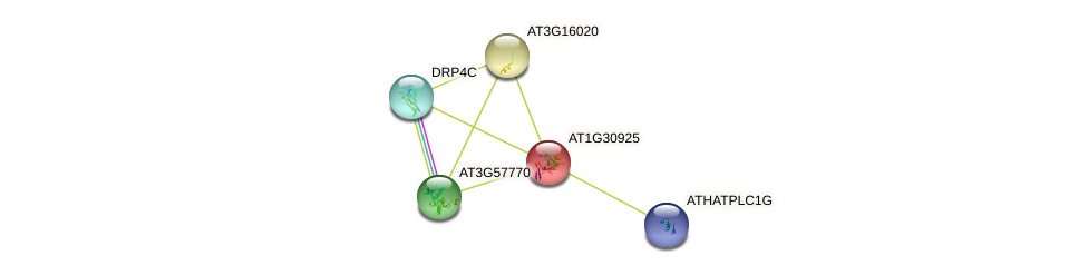 AT1G30925 protein (Arabidopsis thaliana) - STRING interaction network