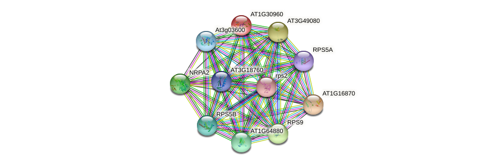 AT1G30960 protein (Arabidopsis thaliana) - STRING interaction network