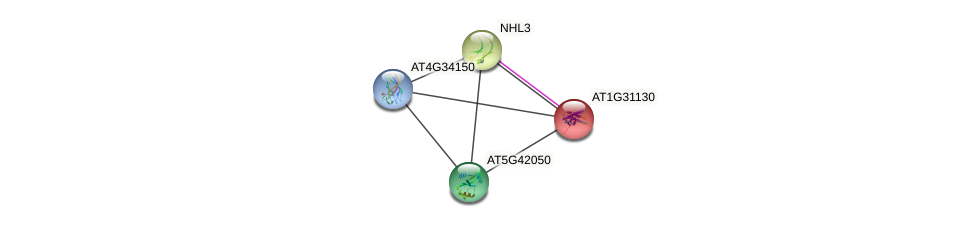 AT1G31130 protein (Arabidopsis thaliana) - STRING interaction network