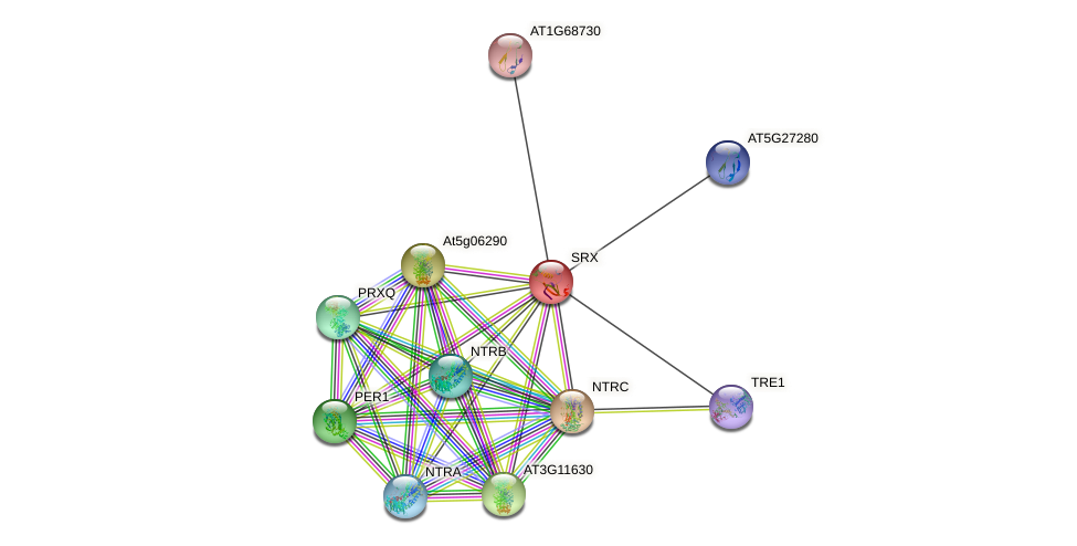 SRX protein (Arabidopsis thaliana) - STRING interaction network