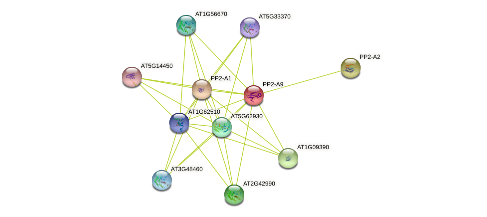 PP2-A9 protein (Arabidopsis thaliana) - STRING interaction network