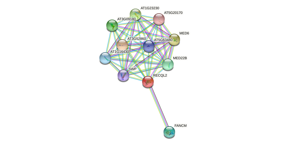 RECQL2 protein (Arabidopsis thaliana) - STRING interaction network