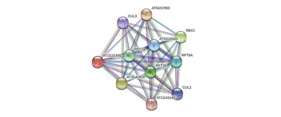 AT1G31400 protein (Arabidopsis thaliana) - STRING interaction network
