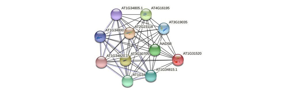 AT1G31520 protein (Arabidopsis thaliana) - STRING interaction network