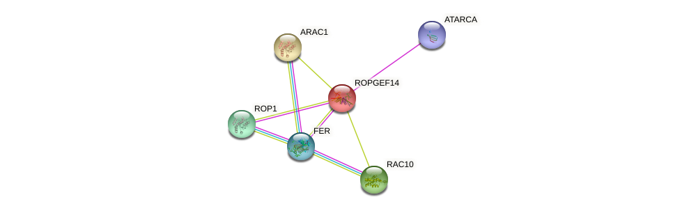 ROPGEF14 protein (Arabidopsis thaliana) - STRING interaction network