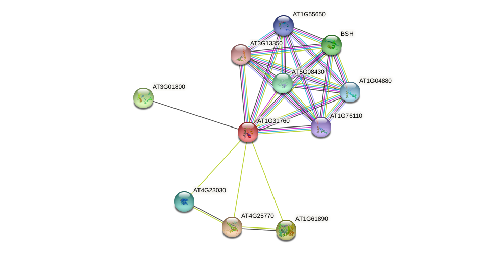 AT1G31760 protein (Arabidopsis thaliana) - STRING interaction network
