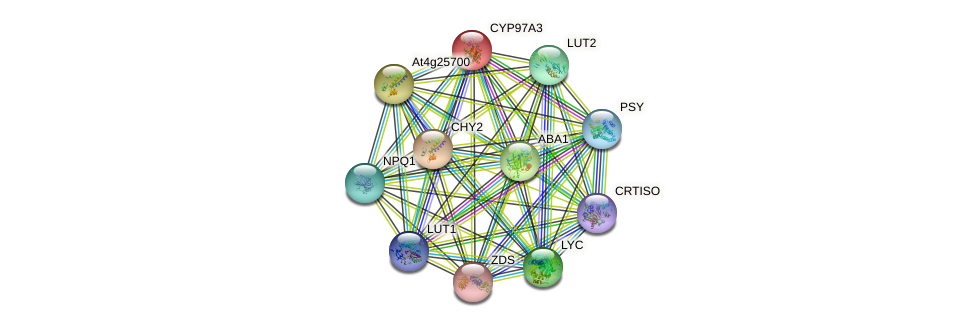 CYP97A3 protein (Arabidopsis thaliana) - STRING interaction network