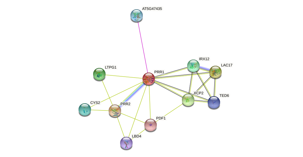 PRR1 protein (Arabidopsis thaliana) - STRING interaction network