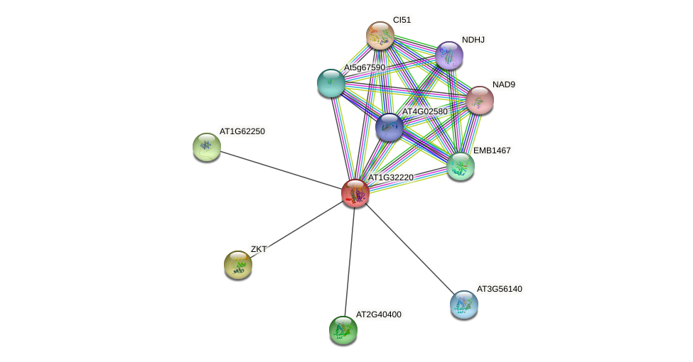 AT1G32220 protein (Arabidopsis thaliana) - STRING interaction network