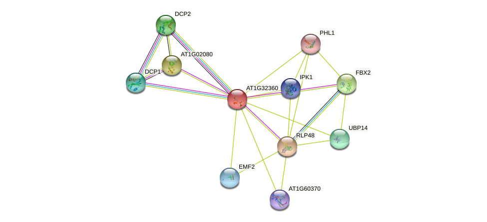 AT1G32360 protein (Arabidopsis thaliana) - STRING interaction network