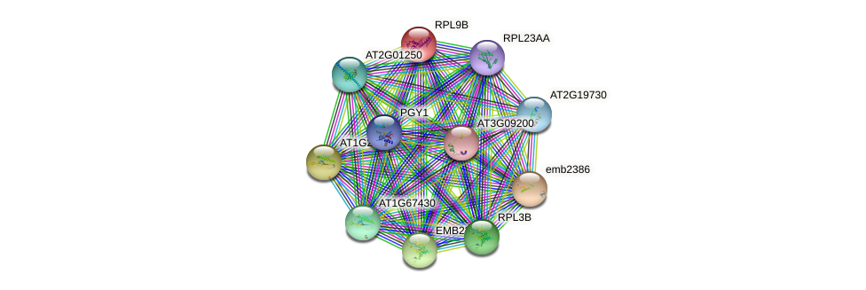 AT1G33120 protein (Arabidopsis thaliana) - STRING interaction network