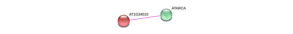 AT1G34010 protein (Arabidopsis thaliana) - STRING interaction network