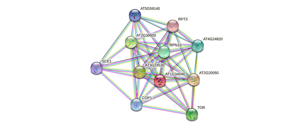 AT1G34046 protein (Arabidopsis thaliana) - STRING interaction network