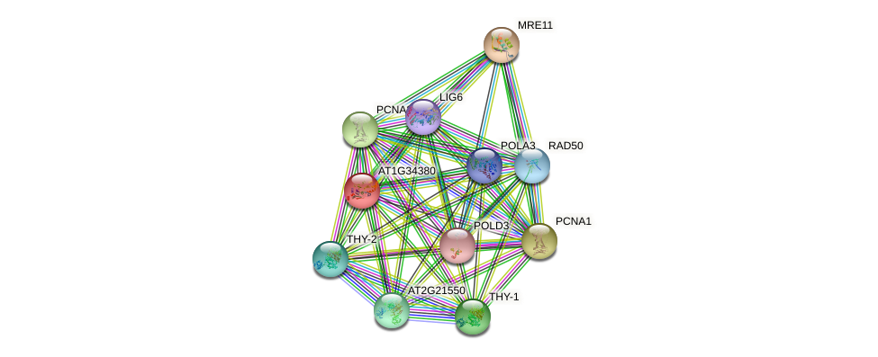 AT1G34380 protein (Arabidopsis thaliana) - STRING interaction network