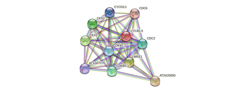 CYCB1;5 protein (Arabidopsis thaliana) - STRING interaction network