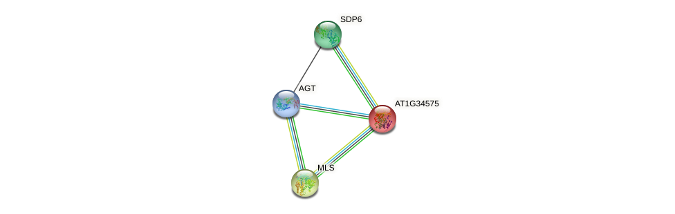 AT1G34575 protein (Arabidopsis thaliana) - STRING interaction network