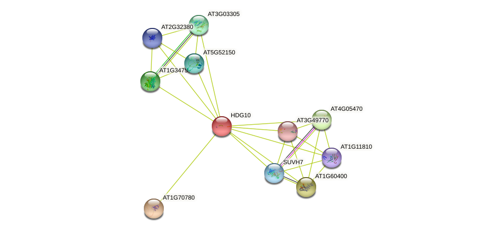 HDG10 protein (Arabidopsis thaliana) - STRING interaction network