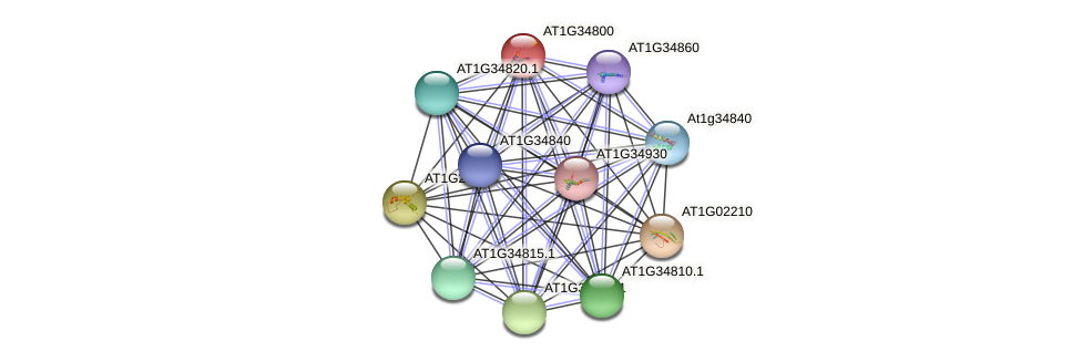AT1G34800 protein (Arabidopsis thaliana) - STRING interaction network
