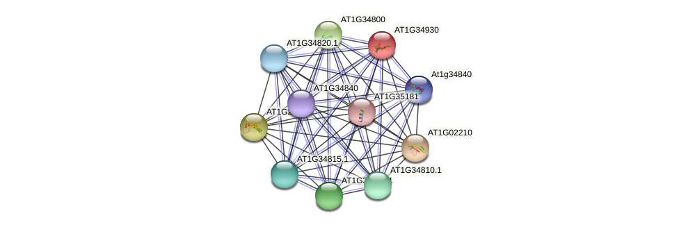 AT1G34930 protein (Arabidopsis thaliana) - STRING interaction network