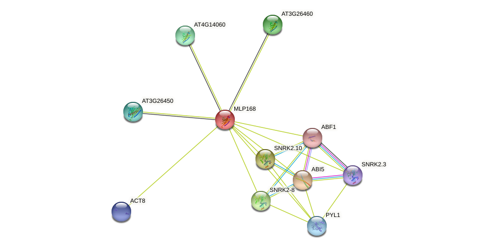 MLP168 protein (Arabidopsis thaliana) - STRING interaction network
