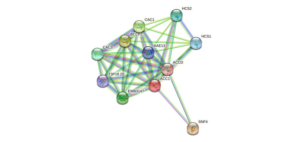 ACC1 protein (Arabidopsis thaliana) - STRING interaction network
