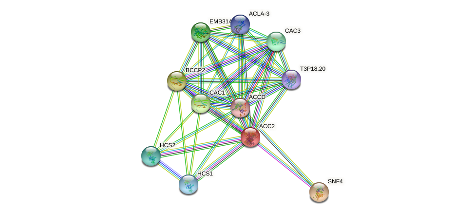 ACC2 protein (Arabidopsis thaliana) - STRING interaction network