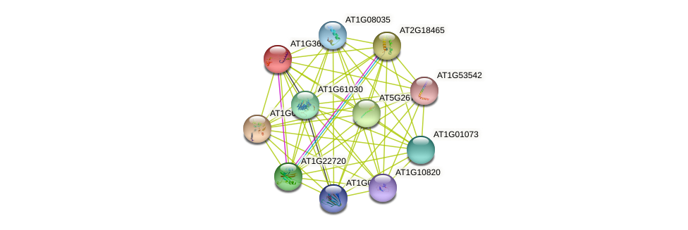 AT1G36950 protein (Arabidopsis thaliana) - STRING interaction network