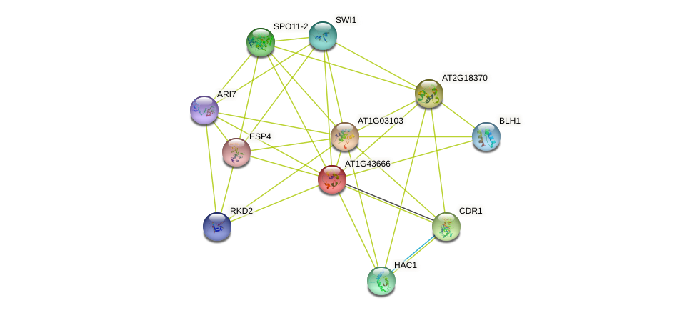 AT1G43666 protein (Arabidopsis thaliana) - STRING interaction network