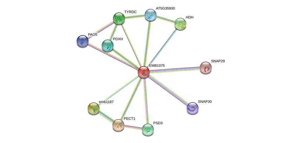EMB1075 protein (Arabidopsis thaliana) - STRING interaction network