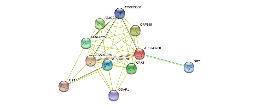 AT1G43760 protein (Arabidopsis thaliana) - STRING interaction network