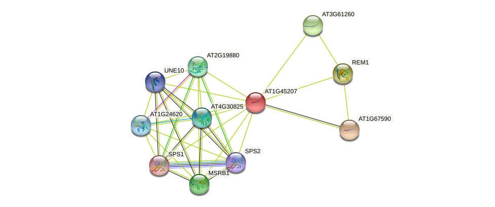 AT1G45207 protein (Arabidopsis thaliana) - STRING interaction network