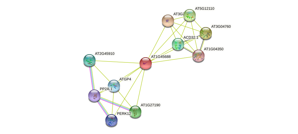 AT1G45688 protein (Arabidopsis thaliana) - STRING interaction network