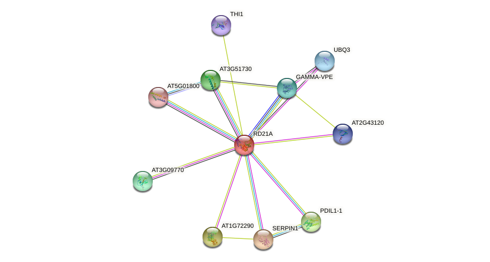 RD21A protein (Arabidopsis thaliana) - STRING interaction network
